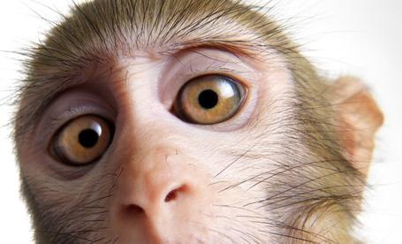 Фото Большие глазки обезьянки (Lennette Newell)