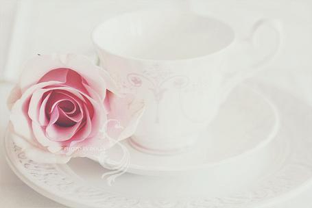 Фото Белая чашка с розой