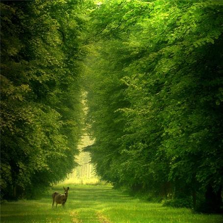 Фото На большой поляне в лесу стоит косуля и настороженно слушает шум леса