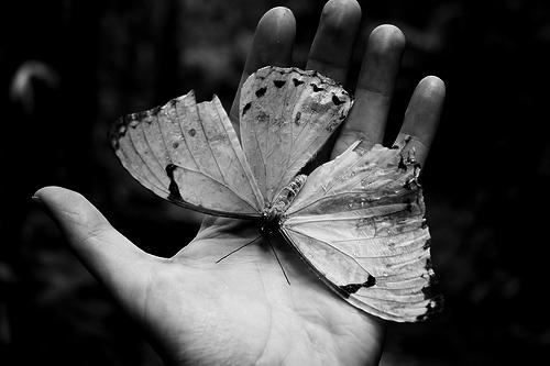Фото Бабочка с поломанными крыльями на руке