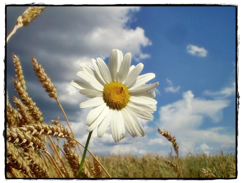 http://99px.ru/sstorage/56/2012/02/image_561302121558069733540.jpg height=421