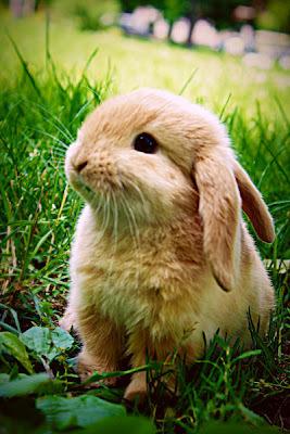 Животные кролики милые природа