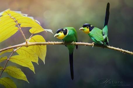 ���� ��� ��������� ������� ������ �� ����� (Nature, �������� Sasi - smit) (� Radieschen), ���������: 03.02.2012 06:16