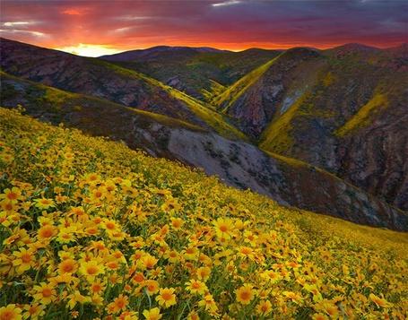 Фото Поле жёлтых цветов высоко в горах (© Anatol), добавлено: 05.02.2012 18:36
