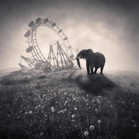 Фото Слон, представляющий колесо обозрения, фотохудожник - Denis Olivier