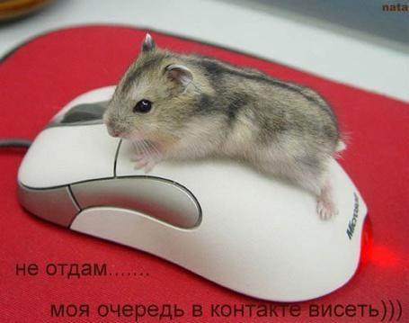 Фото Хомячок в контакте