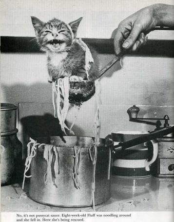 Фото Котёнок помогает варить лапшу  (© Malenkoe 4ydo), добавлено: 07.02.2012 08:29