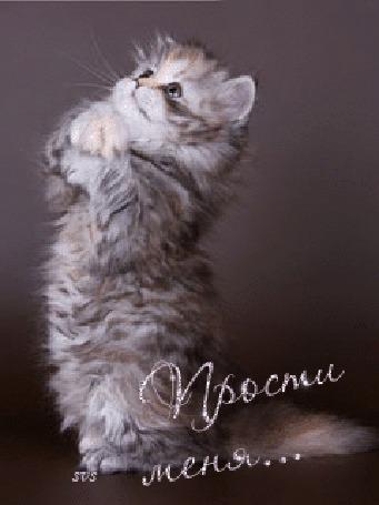 Фото Котенок стоит на задних лапках, сложив передние, изображая фразу: 'Прости меня...' (© Rainy), добавлено: 08.02.2012 00:15