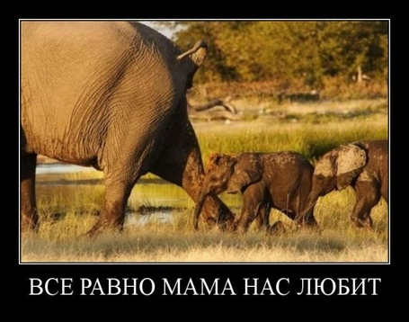 Фото Всё равно мама нас любит (© Штушка), добавлено: 08.02.2012 17:32