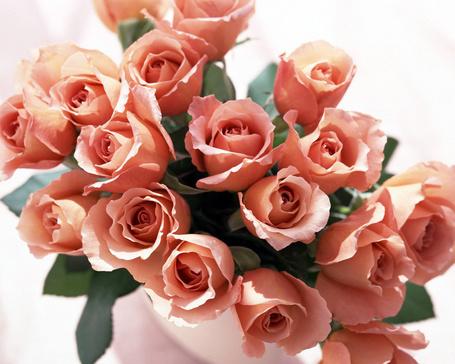 Фото Розы в белой вазе (© Анютка765), добавлено: 11.02.2012 12:26