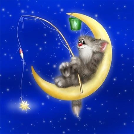Фото Котик сидит на луне и ловит звездочки
