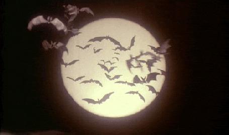 Фото Летучие мыши  на фоне луны (© BRODJaGA), добавлено: 12.02.2012 19:47