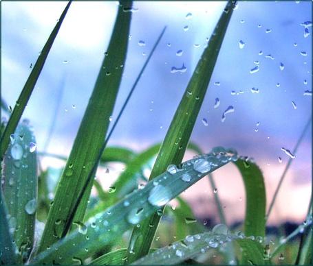 Фото Роса на траве (© Флориссия), добавлено: 12.02.2012 20:00