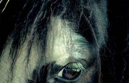 Фото Глаз коня, фотографии Гленды Ортис