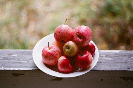Фото Тарелка со спелыми яблоками (© Радистка Кэт), добавлено: 18.02.2012 20:52
