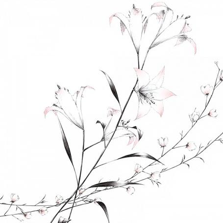 Фото Красивые цветы (© Krista Zarubin), добавлено: 20.02.2012 21:29