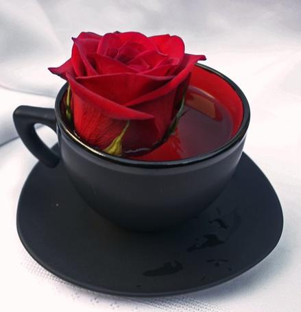 Фото Алая роза в чашке с чаем (© Штушка), добавлено: 22.02.2012 00:25