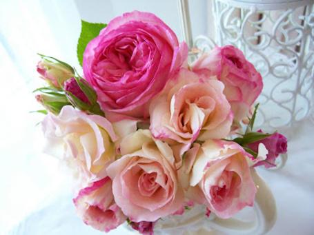 Фото Красивые розы в чашке (© Штушка), добавлено: 23.02.2012 23:39