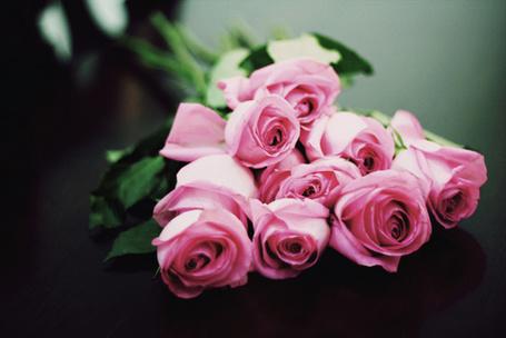 Фото Розовые розы (© Штушка), добавлено: 23.02.2012 23:57