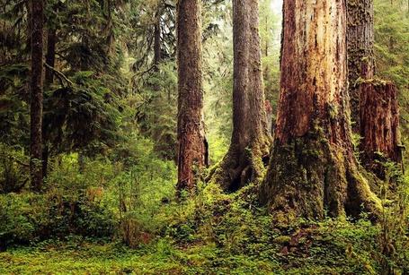 Фото Лес покрытый зеленью и мхом, французский фотограф Alexandre Deschaumes (© Radieschen), добавлено: 24.02.2012 16:51