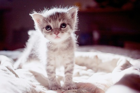 Фото Милый котенок (© Радистка Кэт), добавлено: 24.02.2012 23:03