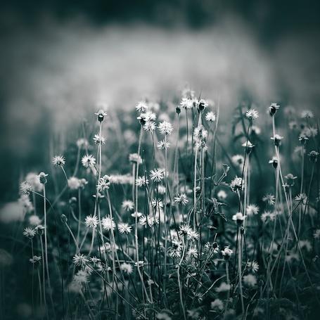 Фото Невзрачные маленькие луговые цветы