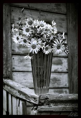 Фото Скромный букет полевых ромашек (© Malenkoe 4ydo), добавлено: 25.02.2012 08:41