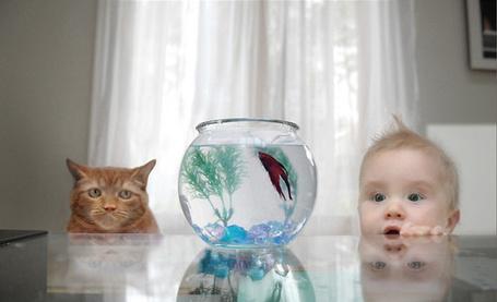 Фото Ребенок и кот наблюдают за рыбкой в аквариуме