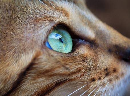 Фото Мордочка кота (© StepUp), добавлено: 26.02.2012 11:31