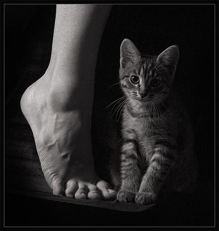 Фото Котёнок у ноги своего хозяина (© Malenkoe 4ydo), добавлено: 29.02.2012 08:56