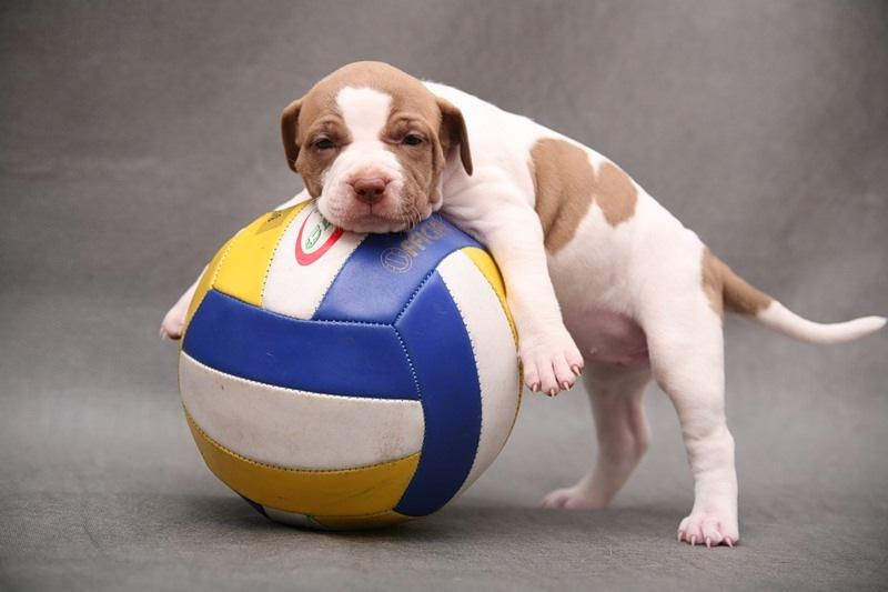 собаки как они ловят мяч