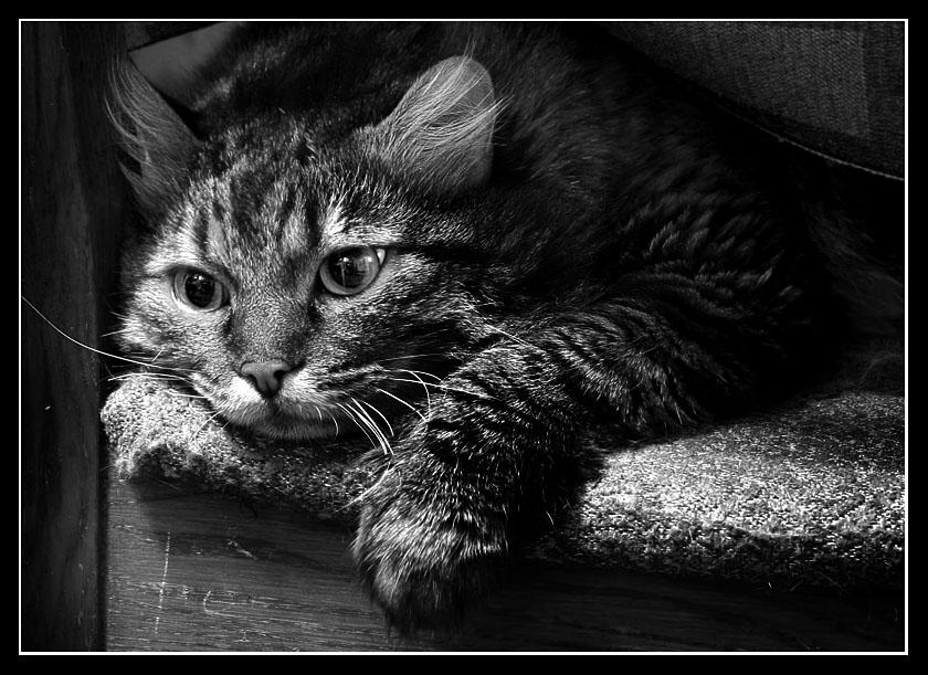 Несчастный котик картинки