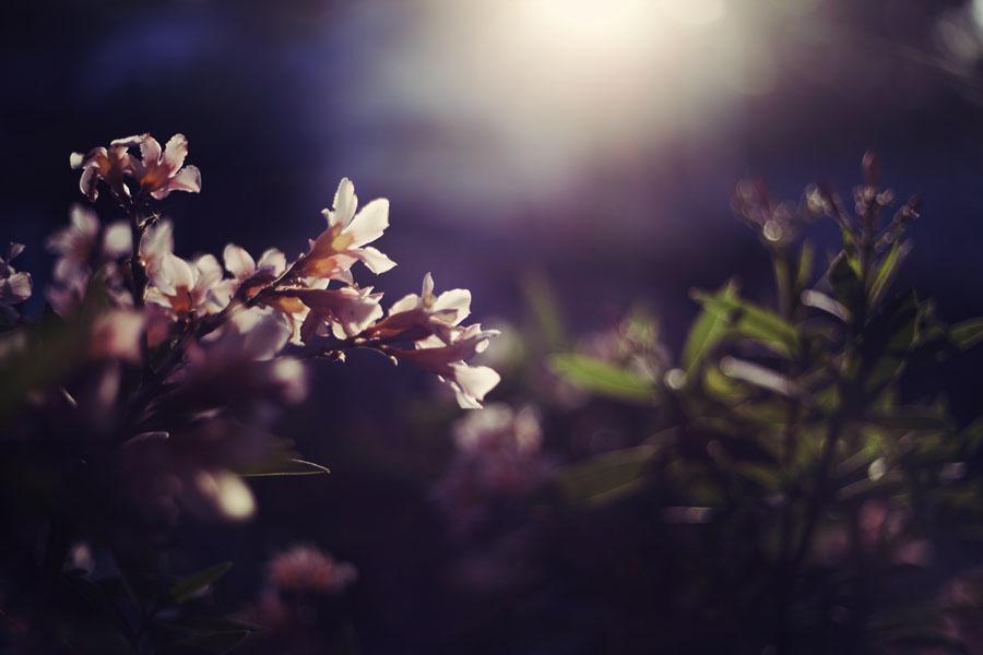 Цветы ночью
