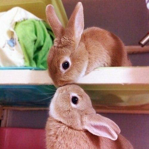 Фото милые кролики