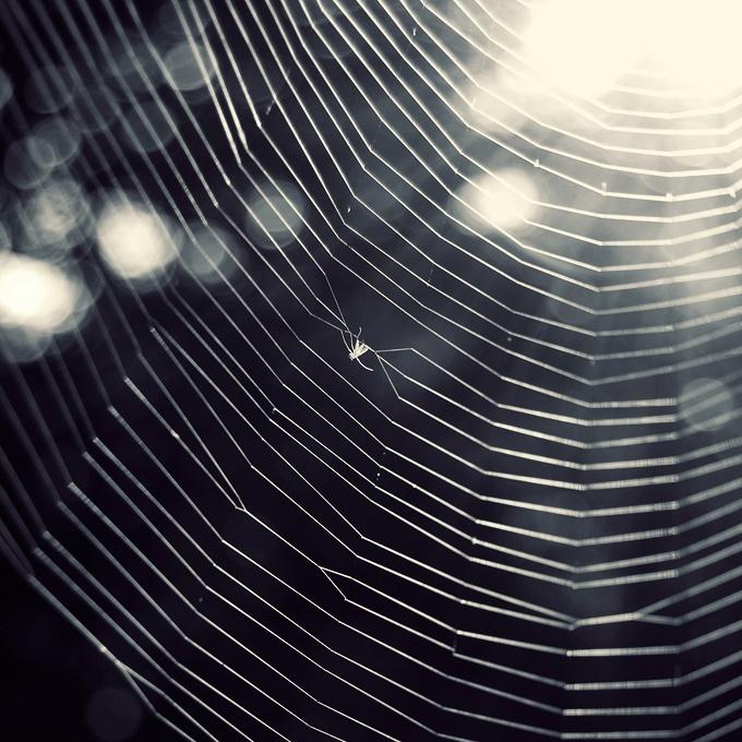 Черно-белые рисунки паутина
