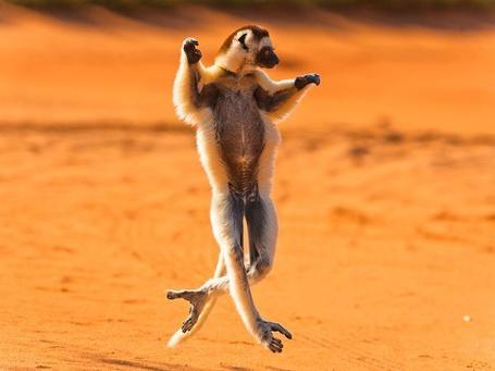 ���� ����� ������� �� ����������� / Madagascar, National Geographic 2011 (� Radieschen), ���������: 02.03.2012 16:22