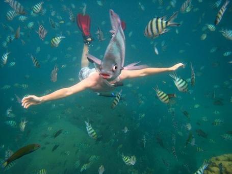 Фото Человек плавает среди рыб, Тайланд / Thailand, National Geographic 2011 (© Radieschen), добавлено: 02.03.2012 16:25