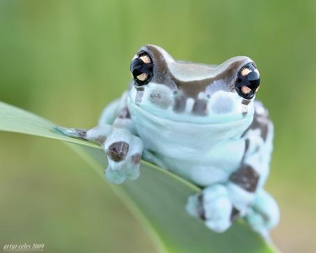 Фото Симпатичная лягушка на листе (© Штушка), добавлено: 04.03.2012 00:20