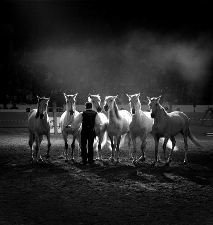 Фото Цирковые кони (© Malenkoe 4ydo), добавлено: 04.03.2012 08:42