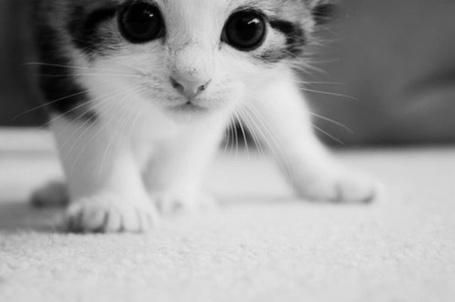 Фото Маленький любопытный котенок (© Феминистка), добавлено: 05.03.2012 18:55