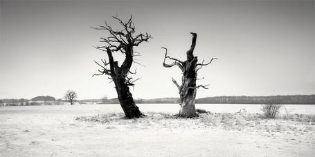 Фото Два сухих дерева в поле, фотограф - Martin Stavars (© Malenkoe 4ydo), добавлено: 06.03.2012 07:58