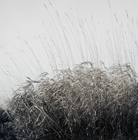 Фото Высокая трава (© Malenkoe 4ydo), добавлено: 07.03.2012 11:18
