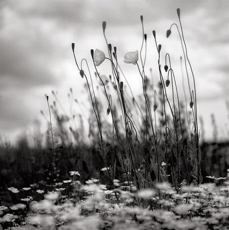 Фото Луговые цветы