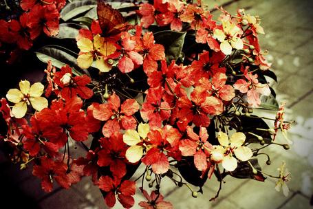 Фото Красные маленькие цветы (© Капитошка), добавлено: 09.03.2012 04:27