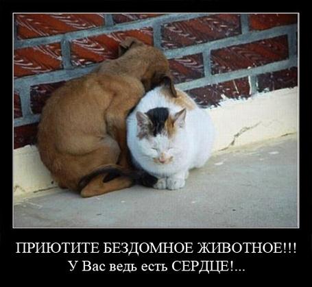 Фото ПРИЮТИТЕ БЕЗДОМНОЕ ЖИВОТНОЕ!!! У Вас ведь есть СЕРДЦЕ ! (© Princessa), добавлено: 09.03.2012 05:41