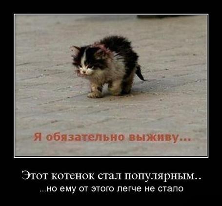 начал я выживу картинка с котом смерти криса напоминал