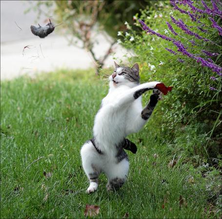 Фото Кот охотится за мышкой (© Elvi), добавлено: 09.03.2012 14:32