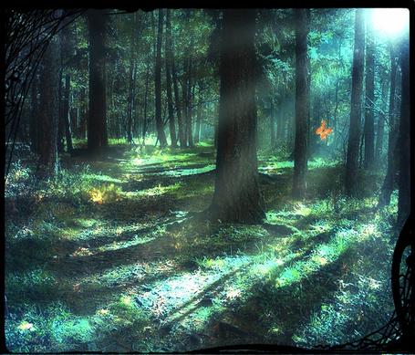 Фото В сказочном лесу (© Флориссия), добавлено: 10.03.2012 17:23