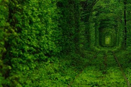 Фото 'Тоннель Любви' в городе Клевань, Украина/ Ukraine (© Rainy), добавлено: 11.03.2012 18:07