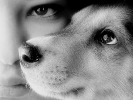 Фото Человек и собака нос к носу